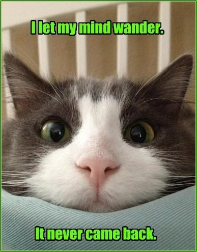 green lolcat