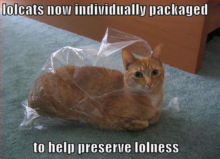fresh lolcat