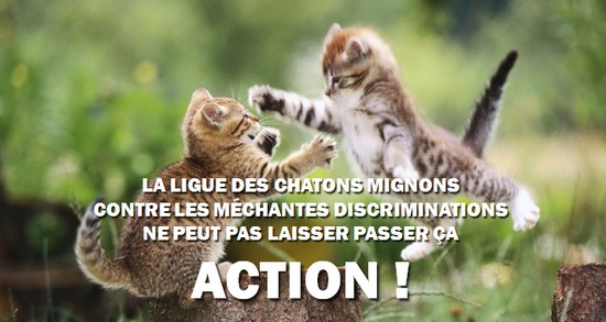 ligue des chatons mignons action