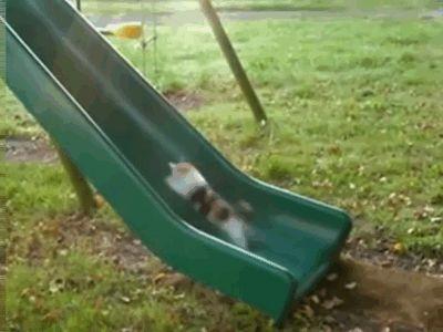 cat slide