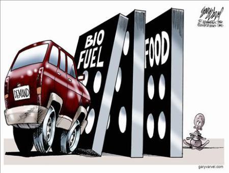 Biocarburant et nourriture, il faut choisir