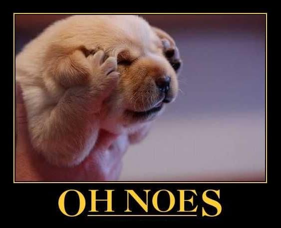 oh-noes-dog.jpg