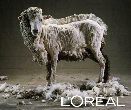Tous des Moutons