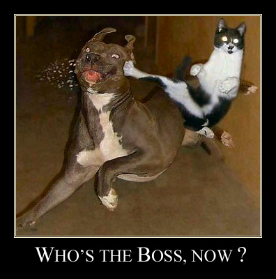 Cat vs Dog : Who's the boss, now ?
