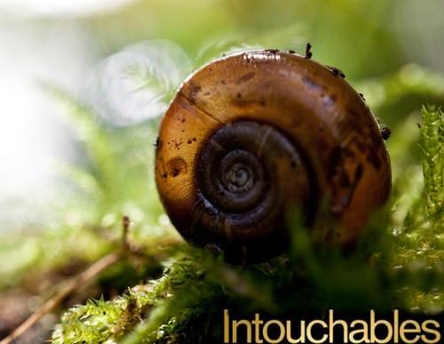 escargots de quimper intouchables