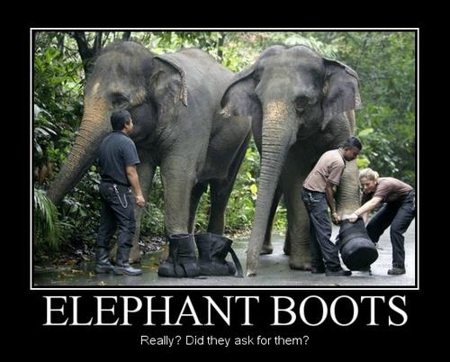 éléphant avec des bottes