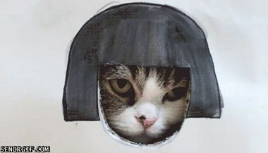 cat conspiration