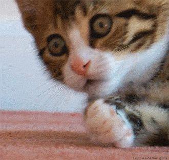 cat-omg