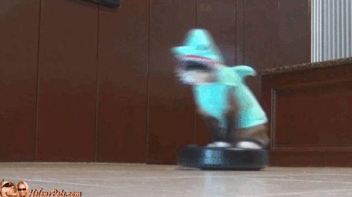 cat shark roomba