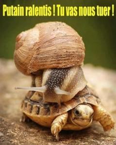 escargot tortue ralentis tu vas nous tuer