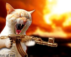 machine_gun_cat