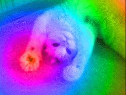 gifa psychedelic cat