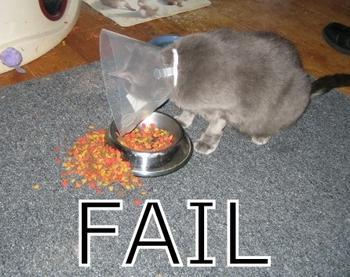 fail cat eating