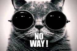 no way cat