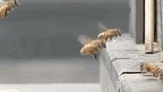 gifa bees exploding