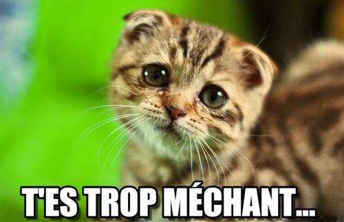 chaton triste t'es trop méchant