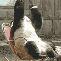 gifa panda oh no facepalm