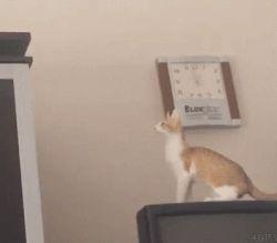 gifa cat-jump-epic-fail
